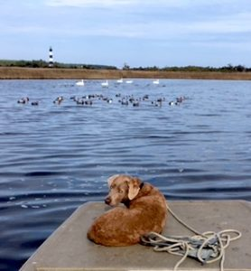 Outer Banks Water Fowl